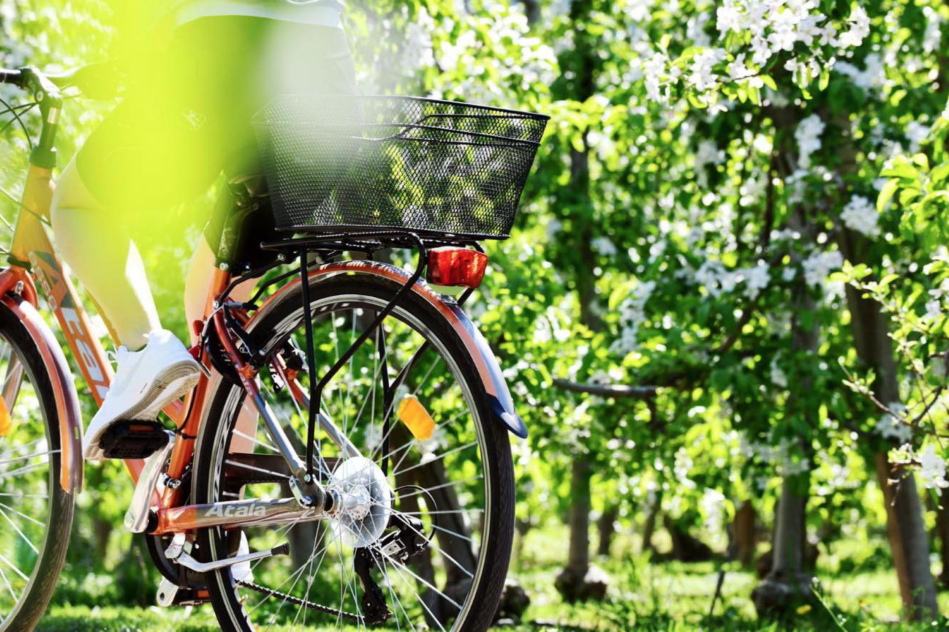 Agriturismo Dolomites Charming agriturismo in an apple orchard in the Dolomites